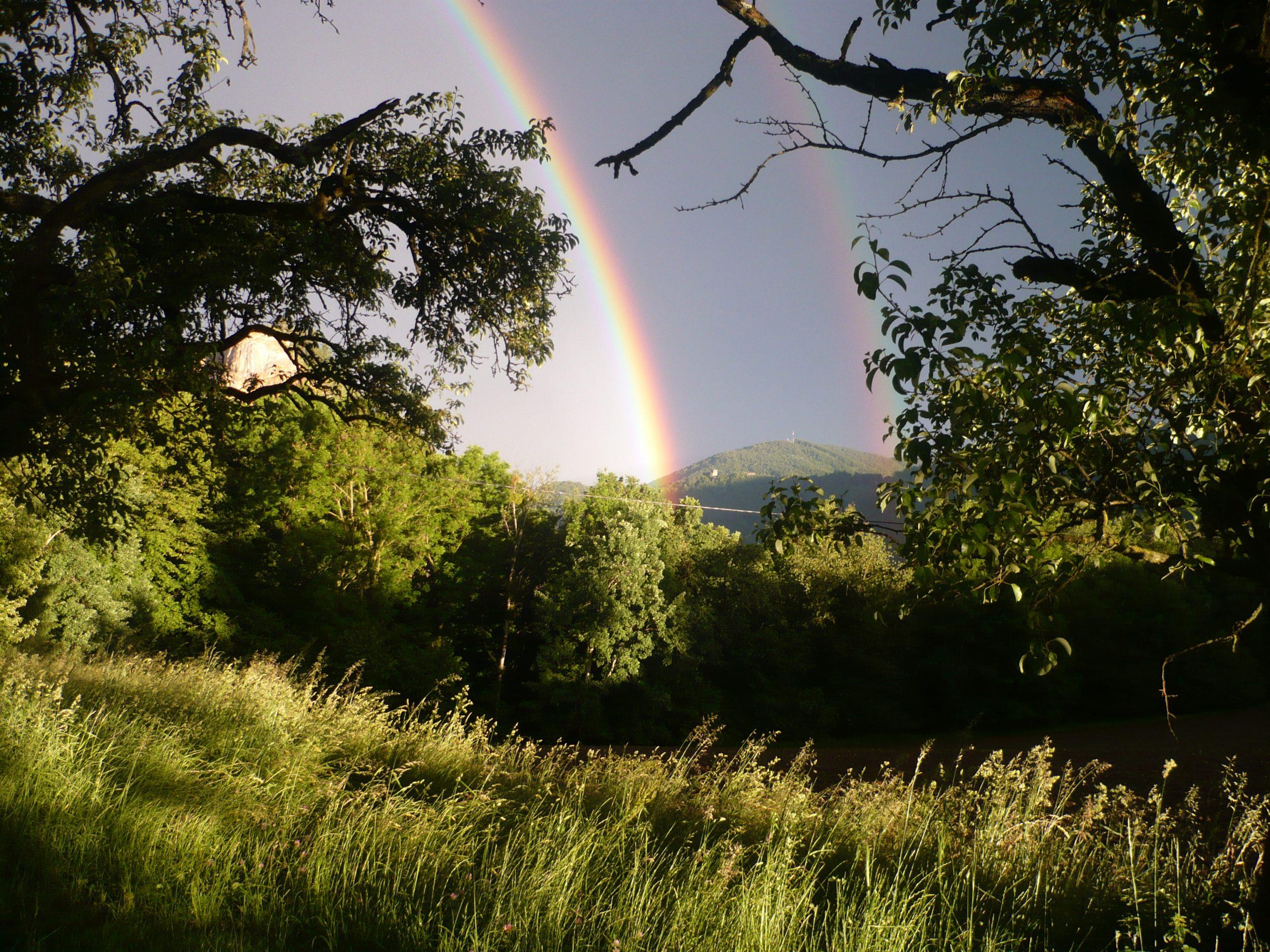 Landschaft mit Bäumen und Regenbogen am Himmel