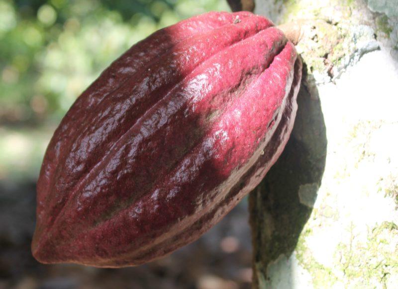 Kakao-Workshop